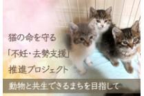 https://www.furusato-tax.jp/gcf/355