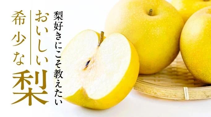 梨,幸水,新甘泉,二十世紀梨,豊水,新高梨,20世紀梨に関連する特集