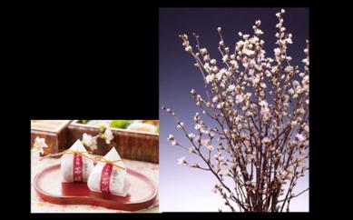 1月:「冬のお花見セット」のご紹介