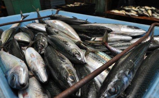 漁港直送の鮮度抜群の魚。大漁です!
