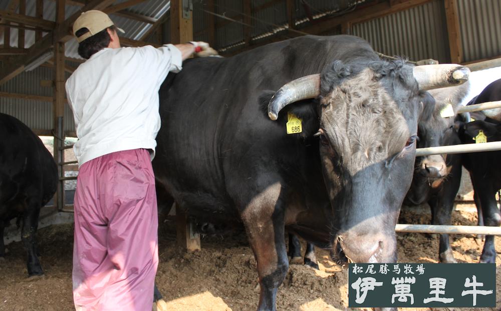 牛のコンディションと成長のチェックは必須