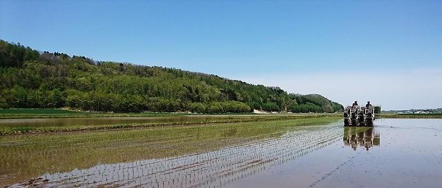 青空の下、田植えが始まりました!