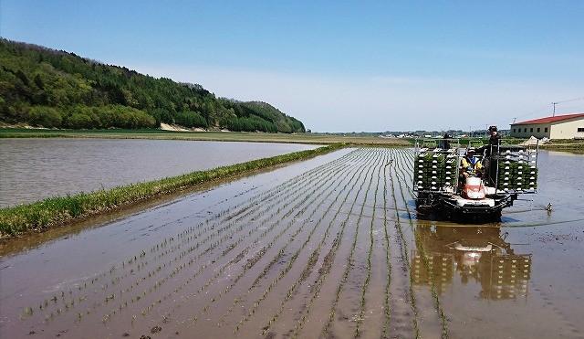 普段は玉ねぎを栽培する農家さん。この時期は稲作農家さんに変身www