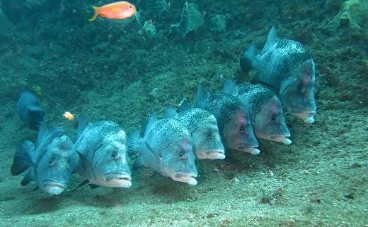 行儀よく整列。魚たちが織りなす風景がたっぷり