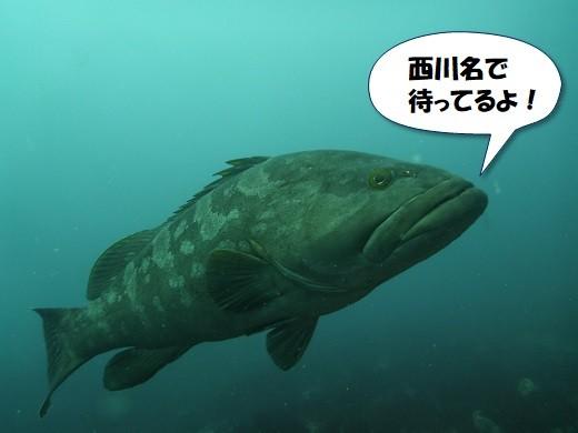 西川名のモロコ(クエ)