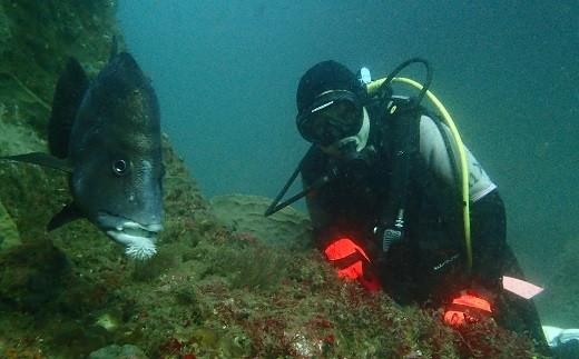 深く潜れるようになると、様々な魚との出会いが