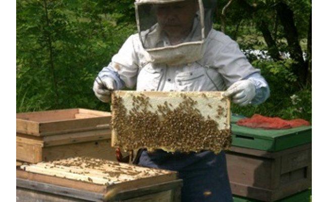 こだわりの方法で、良質な蜂蜜を採っています。