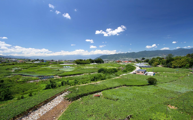 勝沼のブドウ畑