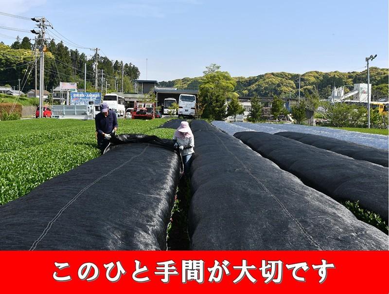 掛川抹茶(袋)100g×3入り