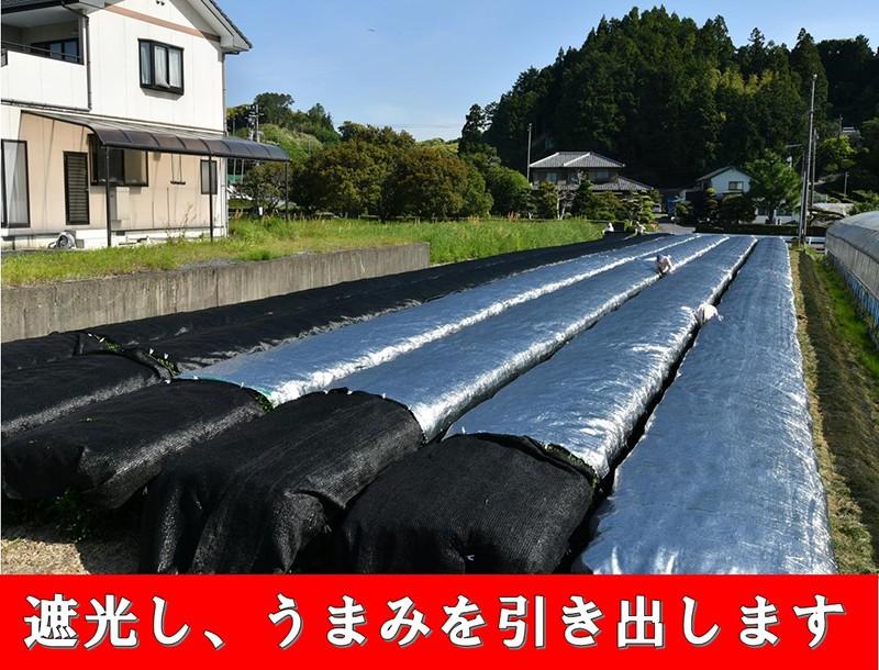 掛川抹茶(缶)20g×2入り