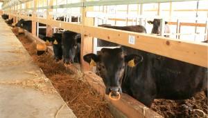 牛舎の様子