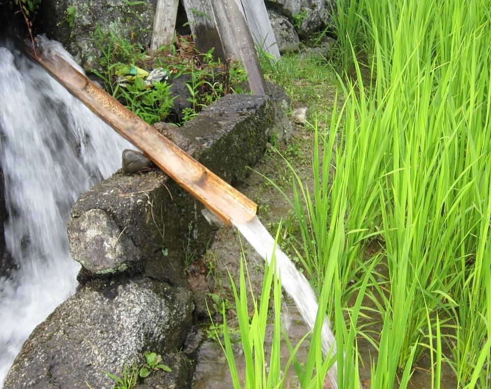 白猪山を源に生まれた清流が、棚田米「夏明かり」を育みます