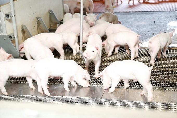 肥育期間が通常より1か月長い‼だから、お肉に旨みがつく‼‼