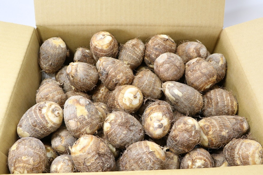 山梨県甲斐市八幡地区で栽培されているやはたいも