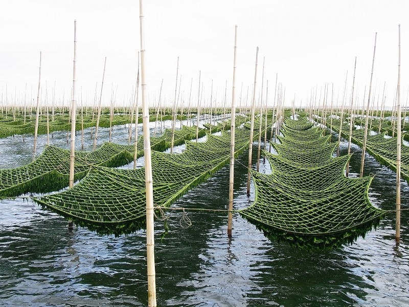 三重県は「あおさ」生産量日本一。松阪市はその優れた漁場のひとつです。