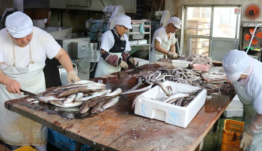 小松島のおいしい魚が、おいしいフィッシュカツを作ります!