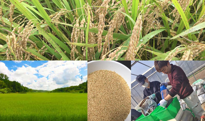 積み上げた熟練のノウハウを駆使して、美味しいお米を育てています。