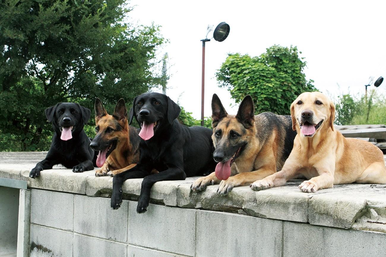 災害救助犬事業