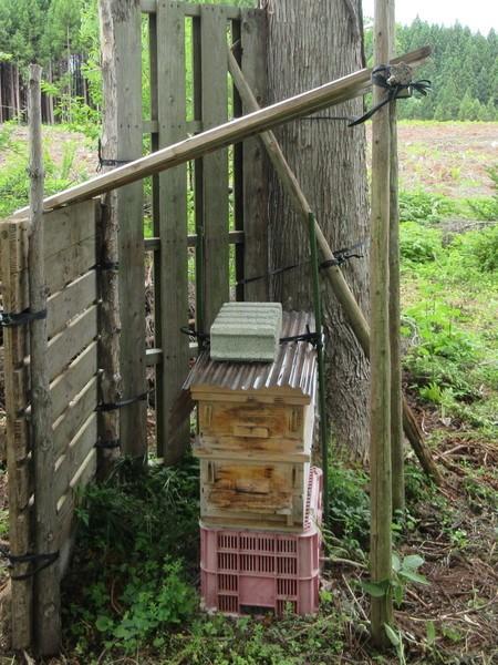ニホンミツバチの巣箱です
