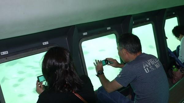 船の中から、自由気ままな魚たちを撮ることもできます