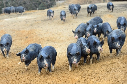沖田黒豚牧場