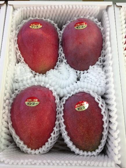 今帰仁マンゴーS級品2kg(4~6玉)