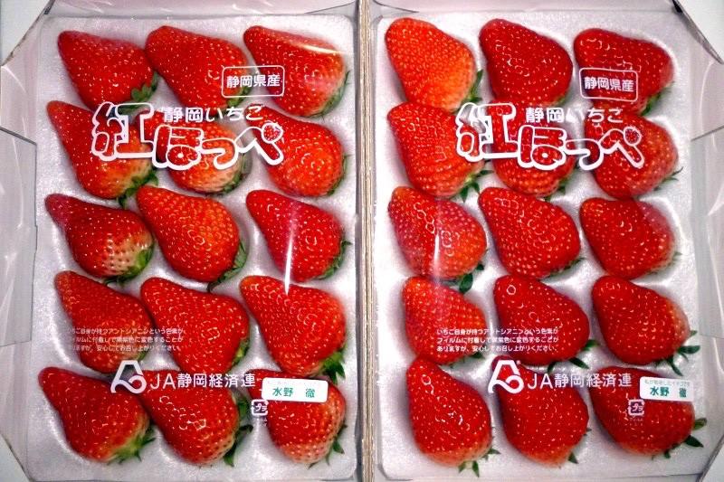 掛川市・水野農園が育てた「紅ほっぺ」イチゴです♪