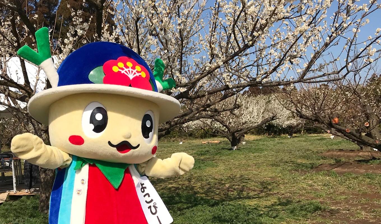横芝光町のキャラクター「よこぴー」も、梅の魅力をアピール!