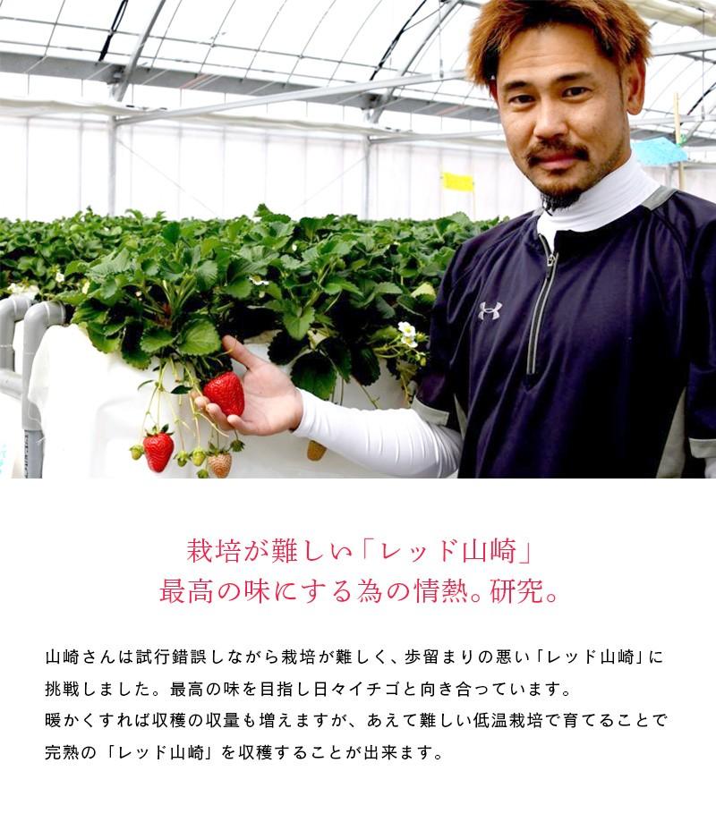 愛情込めて育てられたイチゴ「レッド山崎」と生産者の山崎さん。