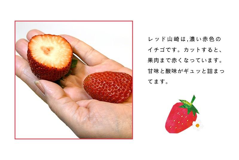 レッド山崎は濃い赤色のイチゴ。味も濃厚!美味しい♪イチゴです。