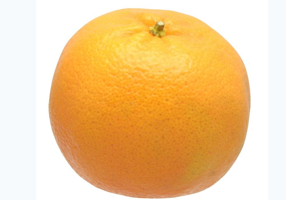 水はけのよい室戸の段々畑で育ったポンカンは、果実の甘味が際立ちます。