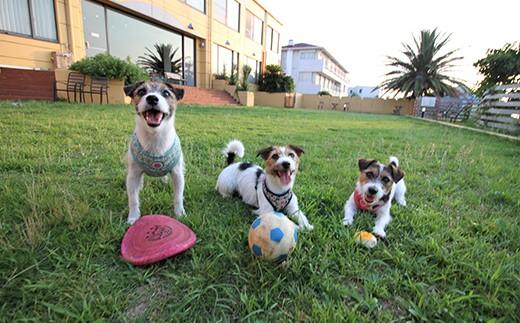 愛犬たちと楽しく過ごせるように、ご協力をお願いいたします。