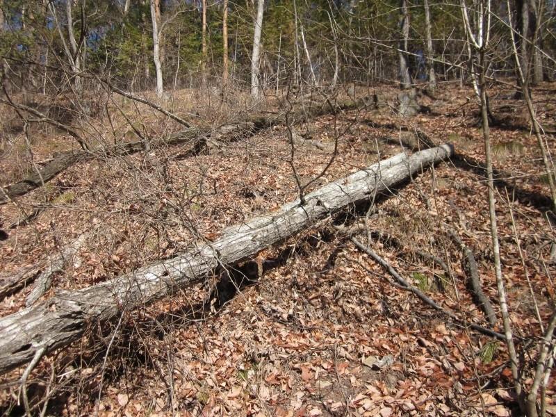 倒木の状態