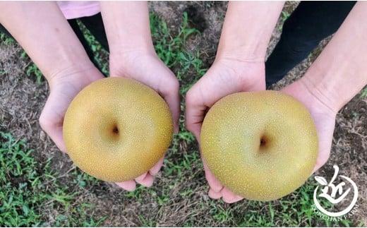 近ちゃん梨