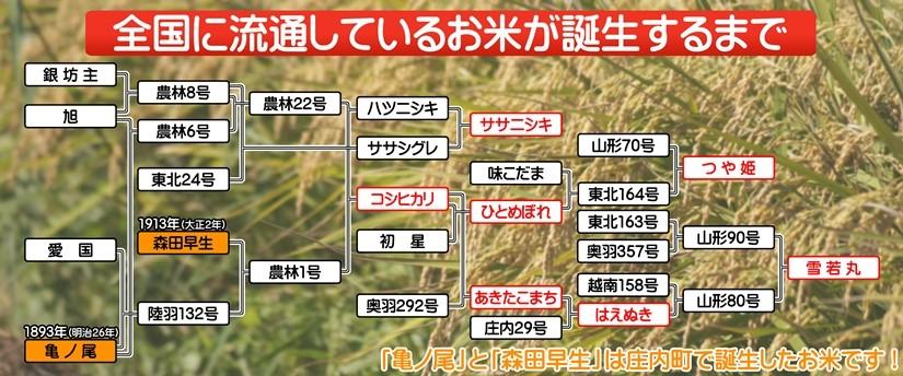 「亀の尾」と「森田早生」の発見でたくさんの品種が誕生しました。