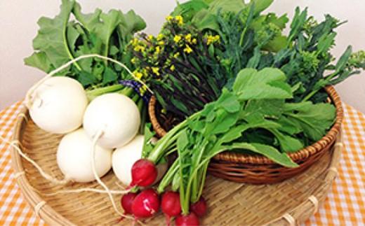 立川産野菜
