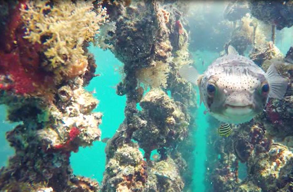 栄養豊富で牡蠣やたくさんの生き物が育つ豊かな海