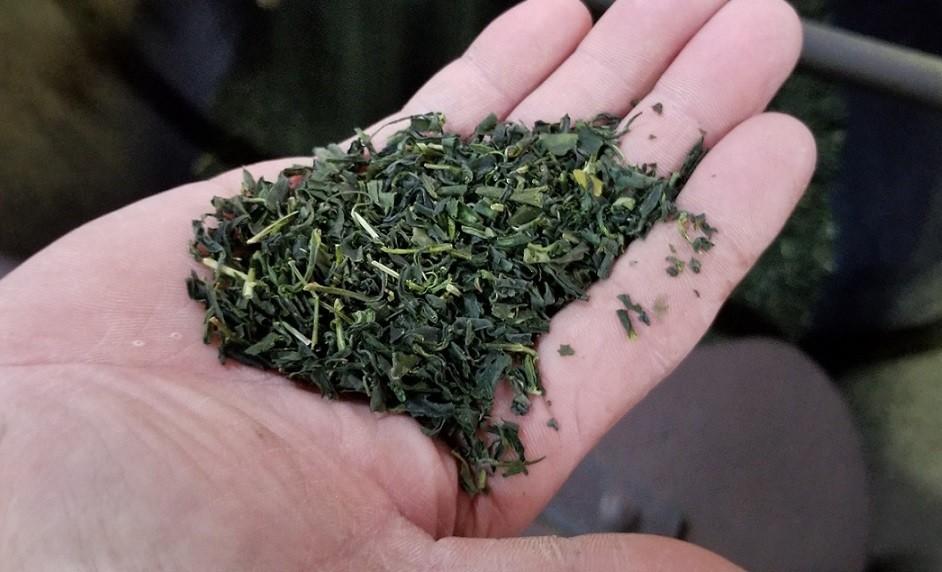 茶葉の香りがいっぱいに広がる工房で真剣にチェックするカジハラさん