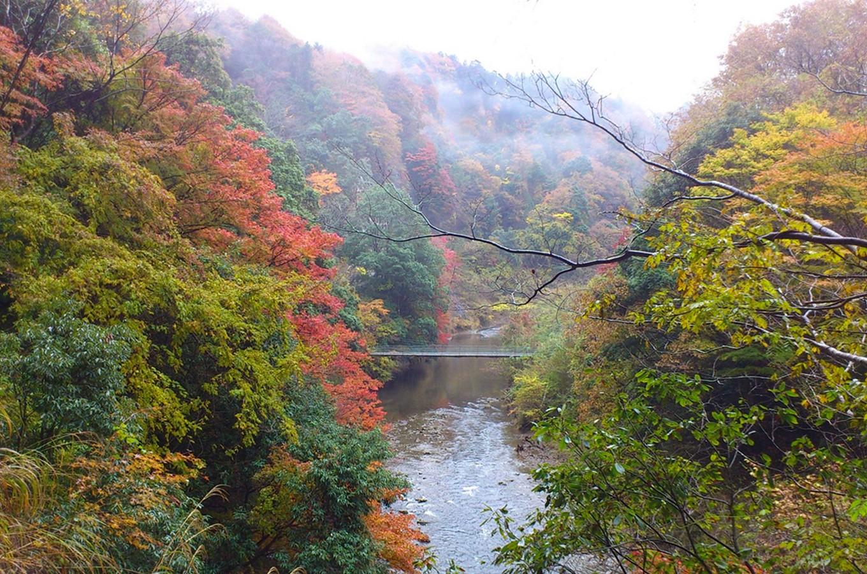 紅葉スポットの養老渓谷や亀山湖に近く、本州一遅い紅葉狩りが楽しめます