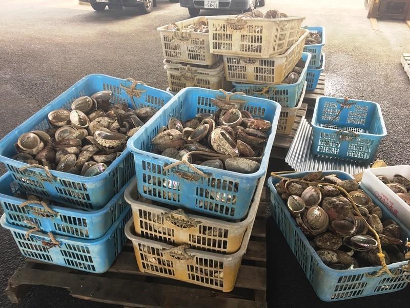 たくさんの貝殻が!捨てるのでしょうか?何かに使うのでしょうか?