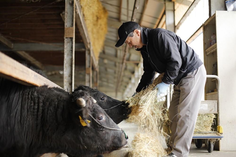 神戸ビーフの産地「黒田庄和牛」
