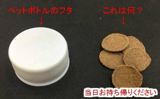 左はペットボトルのフタです。大きさを比較して右のはなんでしょうか?