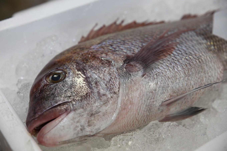 新鮮な魚を・・・