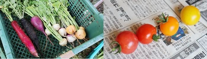 カラフルな野菜たち♪