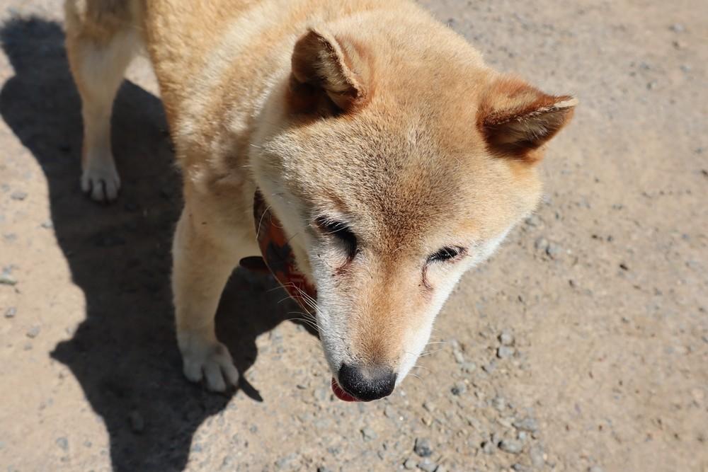愛犬チロルちゃんがお出迎え!
