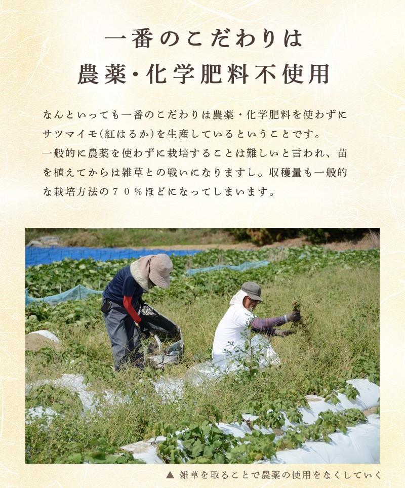 雑草を取ることで農薬の使用をなくしていく。