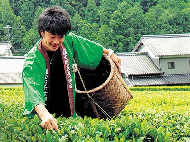 岡崎市の老舗お茶農家・宮ザキ園の有機栽培のお茶を使用しています。