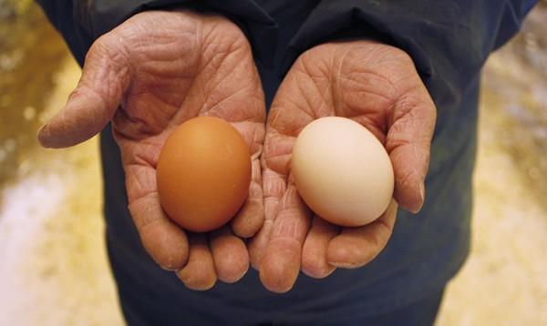 左がボリスブラウン、右がソニアの卵。比べてみるとこんなに色が違う。
