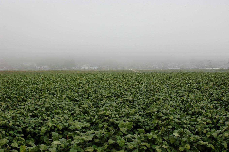 秋の深まりとともに、丹波高原には丹波霧と呼ばれる濃い霧が発生します。
