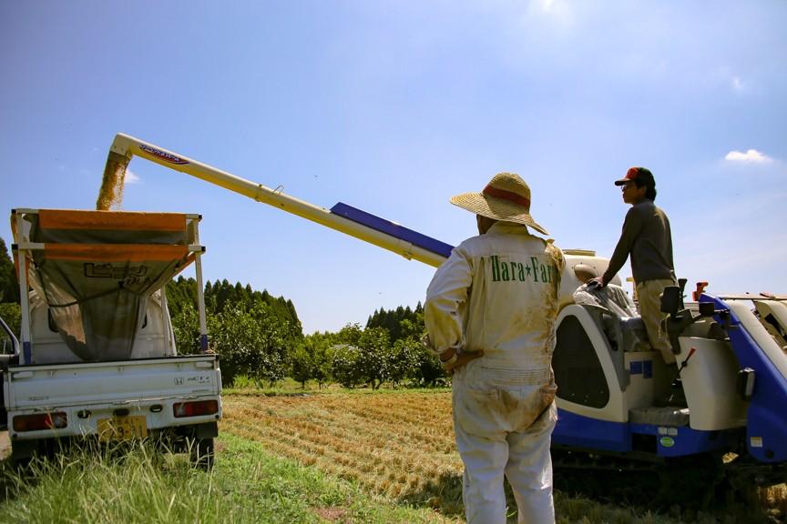お米の収穫の際は、毎年のことながらワクワクします